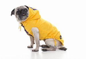 hund will nicht gassi gehen im regen was tun tagblatt der stadt z rich. Black Bedroom Furniture Sets. Home Design Ideas