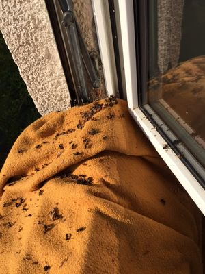 wespen beseitigen good wespen vertreiben with wespen beseitigen wespe auf wespennest with. Black Bedroom Furniture Sets. Home Design Ideas